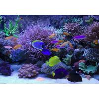 Buy cheap Waterproof led Marine aquarium Light from wholesalers