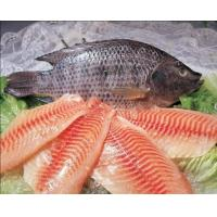 Buy cheap Tilapia Fillets, Whole Round Tilapia from wholesalers
