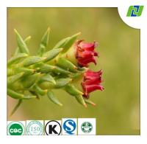 100% natural rhodiola rose extract