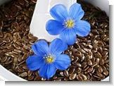 Buy cheap Flax Seed Extract Lignans 20%-80% from wholesalers