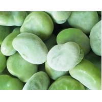 Buy cheap High Grade IQF Frozen Vegetables , Whole / Split Flash Frozen Peeled Broad Beans from wholesalers