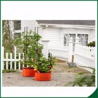 Buy cheap Weatherproof Organic Grow Bags , Tomato Planter Bag With Multi Function from wholesalers