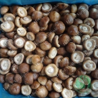 Buy cheap Frozen Shiitake whole from wholesalers