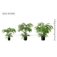 Buy cheap Greenery Artificial Fern Tree Unprecedented Authenticity Black Potted Plant from wholesalers