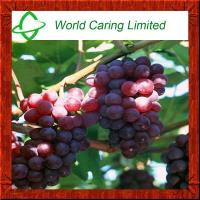 Buy cheap High quality Natural Grape Seed powder Extract Proanthocyanidin 95% for anti from wholesalers
