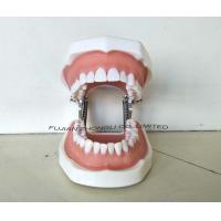 Buy cheap High Quality Typodont Teeth Model with Removable Screw Teeth from wholesalers