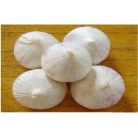 Buy cheap Clean Organic Fresh Nutritional Value Garlic 3p - 5p Mesh Bag Contains Zinc from wholesalers
