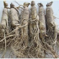 Buy cheap Ginseng,Panax ginseng, Asian ginseng, Oriental ginseng, Chinese ginseng from wholesalers