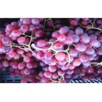Buy cheap Fresh Fruit 24 - 26mm Red Globe Grapes Fresh Juicy With High Sugars , Pyridoxine from wholesalers
