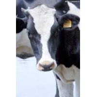 Buy cheap Livestock Traceability Management Solution from wholesalers