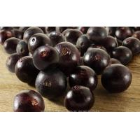 Buy cheap China acai extract from wholesalers