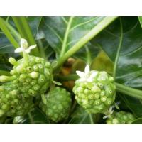 Buy cheap Supply Noni Fruit Extract 10:1 Morinda Citrifolia Extract from wholesalers