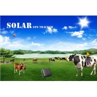 Buy cheap Long battery life solar powered cow gps tracker animal reachfar rf-v26 from wholesalers