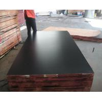 Buy cheap film faced plywood & 1220*2440, 1250*2500mm marine plywood & birch core film face plywood from wholesalers