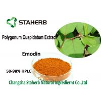 China 98% Emodin Powder Pure Natural Plant Extracts , Polygonum Cuspidatum Root Extract on sale