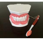 Cheap Study dental care model
