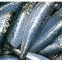 Buy cheap China Wholesale Price BQF 10KG/CTN Frozen WR Sardine Fish for Sale. from wholesalers
