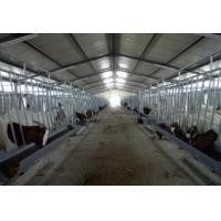 Buy cheap H Beams Poultry Farm Structure Galvanized Water Gutter Drainage System SheepShed from wholesalers
