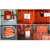 Buy cheap Chinese Sweet Bar Straight Organic Carrot With Round Tail , No Residual Pesticide from wholesalers