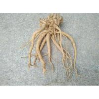 Buy cheap 100% natural suma root extract for dietary supplement from wholesalers