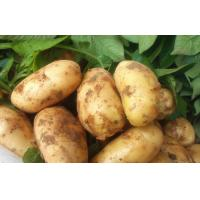 Buy cheap Frozen Fresh Long Heavy Holland Potato Nutritional Value For Long Time Storage from wholesalers