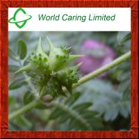 Buy cheap Herbal Extract Tribulus Terrestris Extract 40%-98% Tribulu HPLC for men sexual enhancement from wholesalers