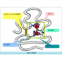 China Recombinant human Chymotrypsin Enzyme for Enzymatic Hydrolysis of Protein on sale