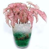 Buy cheap crystal soil water beads from wholesalers