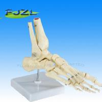 Buy cheap Bones of the Foot product