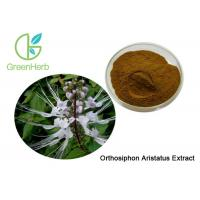 Buy cheap High Quality Natural Orthosiphon Aristatus Extract Powder 10:1 from wholesalers