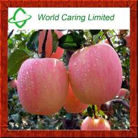 Buy cheap Cosmetic Ingredient Apple Extract Phloretin 70%-98% HPLC product