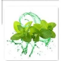 Buy cheap Mint Flavor from wholesalers