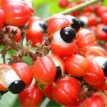 Buy cheap Guarana extract from wholesalers