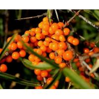 Buy cheap sea buckthorn berry powder extract 10%flavonoids from wholesalers