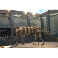 Buy cheap Weather Resistant Simulation Dinosaur Fossil Model For Museum Exhibition from wholesalers