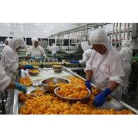 Buy cheap High Efficiency Fruit Canning Equipment Canned Peach Production Line from wholesalers