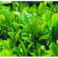 Buy cheap Best quality organic green tea extract from wholesalers