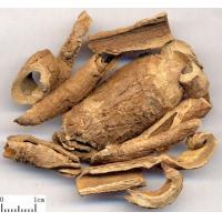 Buy cheap Chinese Silkvine Root-bark CORTEX PERIPLOCAE Periploca sepium Bge traditional eastern therapy Xiang Jia Pi from wholesalers