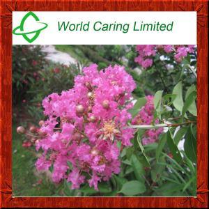 Buy cheap Banaba Leaf P.E Corosolic acid 1%-10% for Blood Glucose Control product