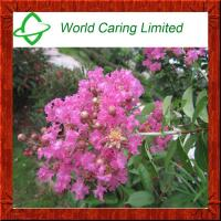 Buy cheap Herbal Extract Banaba Leaf P.E Corosolic acid 1%-10% for weight loss from wholesalers