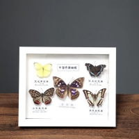 Buy cheap Customized 6/7/8/10/12/16/A3/A4 inch box photo frames, PS material 3D photo frame from wholesalers