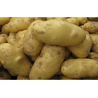 Buy cheap White Skin Shandong Holland Potato Rich Nutritions For Storing from wholesalers