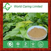Buy cheap 100% Pure Natural Mulberry Leaf Extract powderfor Blood Glucose Control product