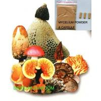 Buy cheap Mushroom Powder & Mushroom Mycelium Powder from wholesalers