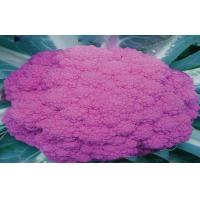 Buy cheap Organic Purple Freezing Fresh Cauliflower Low Fat , 40 - 60 Mm from wholesalers
