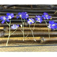 Candle Decoration Dried Flower Art , Larkspur With Stem DIY Pressed Flowers