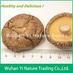Buy cheap China Dried Shiitake Mushroom from wholesalers