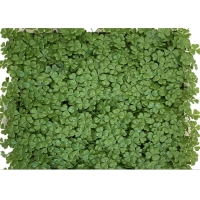 Buy cheap Vertical Garden Artificial Green Panels Faux Plant Wall Panels Four Leaf Clover Hedge Board from wholesalers