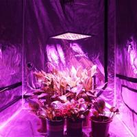 Buy cheap Hydroponic LED Plant Grow Light , 300W Full Spectrum Lamp for Greenhouse product