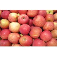 Buy cheap Crispy Delicious Red Fresh Fuji Apple Juicy For Baked / Stewed from wholesalers